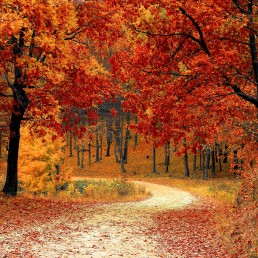 Autumn Woods Path Image